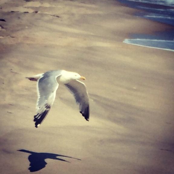 seagull over beach